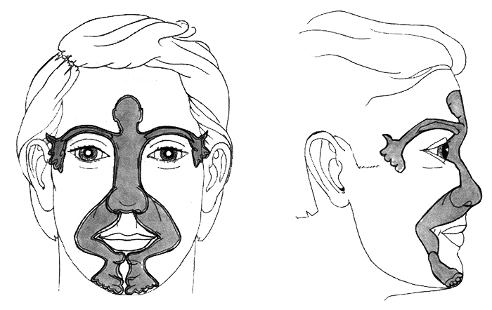 Projection of the parts of the body on the face